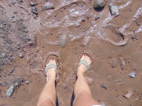 Mud at the Bay of Fundy